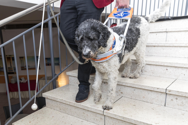 Zum Tag des Hundes am 16. Juni 2019: Wieder in der Welt zurück – mit Hund