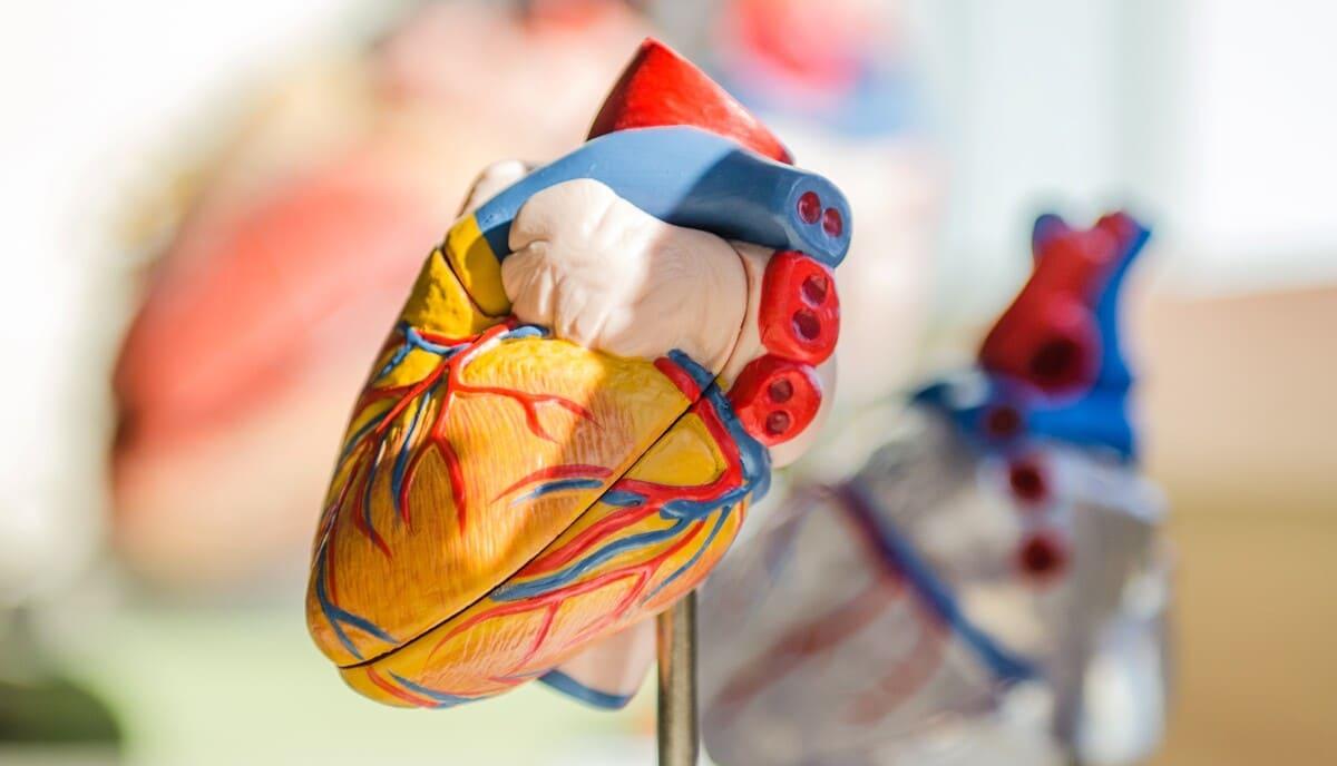Neue Studie: OCT-Scans der Retina zeigen potentiellen Biomarker für Herz-Kreislauf-Erkrankungen